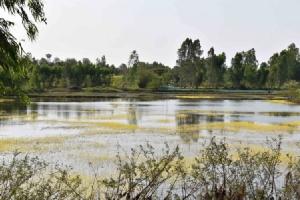 (ชมคลิป) ตะลึง! แล้งจัดดอกไม้น้ำสีทองผุดกลางหนองลำปาวหลงที่เมืองน้ำดำ