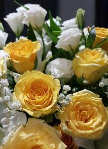 กุหลาบ ดอกไม้ที่มีกลิ่นหอม
