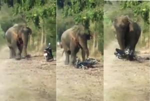 """คลิประทึก! """"เจ้าโยโย่"""" ช้างป่าดงใหญ่ออกหากินพืชไร่-เหยียบทำลาย จยย.ชาวบ้านบุรีรัมย์"""