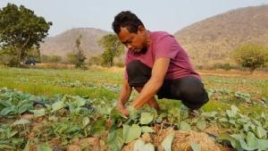 เกษตรกรชัยนาทไม่ยอมแพ้ปลูกคะน้าบริเวณตีนเขา หารายได้สู้ภัยแล้ง
