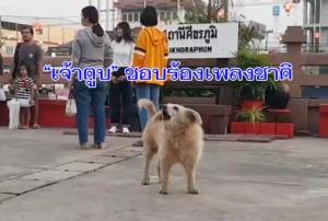 """แปลก! พบ """"เจ้าตูบ"""" เมืองช้างชอบร้องเพลงชาติไทย ทั้ง 8 โมงเช้าและ 6 โมงเย็นเป็นประจำทุกวัน"""