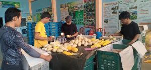 """วิสาหกิจชุมชนรวมตัว """"คนรักมะม่วง"""" ส่งออกมะม่วงพันธุ์ดีทั้งในและต่างประเทศ"""