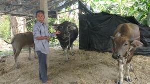 เตือนภัย! แก๊งลักควายอาละวาดใน จ.ชลบุรี ล่าสุดควายเผือกพ่อพันธุ์ถูกลักหาย