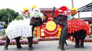 ตระการตา! สวนนงนุชพัทยานำช้างแสนรู้เชิดสิงโตรับเทศกาลตรุษจีน