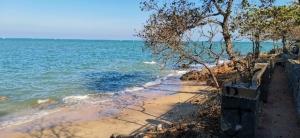 เมืองพัทยา ร่วมสวนนงนุชเตรียมพัฒนาที่สาธารณะริมทะเลแหลมบาลีฮายเป็นจุดเช็กอินแห่งใหม่