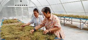 """เกษตรกร จ. ยโสธร โดนนายทุนยึดที่ทำกิน รวมตัวสร้างอาชีพใหม่ """"เกษตรอินทรีย์"""" ผลผลิตธนาคารที่ดิน"""