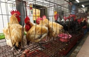 หวัดนก H5N1 ระบาดในจีน ผชช.ชี้ไม่ข้ามผสมกับไวรัสโคโรนาสายพันธุ์ใหม่