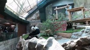 """สวนสัตว์เชียงใหม่เปิดบ้านใหม่หลังเดิมให้ """"หลินฮุ่ย"""" พร้อมป้ายให้กำลังใจฝ่าวิกฤตไวรัส"""