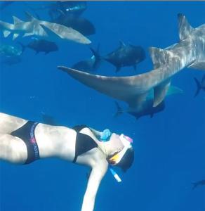 """ว้าวววว """"นท พนายางกูร"""" สวมบิกินีสุดแซ่บดำน้ำเล่นกับฉลามใต้ท้องทะเล (ชมคลิป)"""