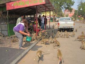 เคราะห์ซ้ำกรรมซัด..คนรอบเขาหน่อปลูกกล้วย-มันฯ สู้แล้ง โดนลิงแสมบุกกินจนท้อ