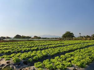 ฟาร์มออร์แกนิคที่ริมปิงใช้ไวรัสฆ่าหนอน