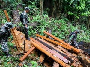 ทหาร-ป่าไม้ร่วมกันจับชาวบ้านลักลอบตัดไม้ในเขตอุทยานแห่งชาติบูโด-สุไหงปาดี
