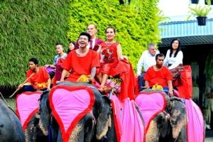 สวนนงนุชพัทยานำ 86 คู่รักจดทะเบียนสมรสบนหลังช้างฉลองวันวาเลนไทน์