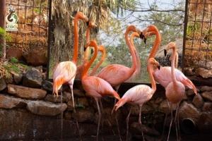 มอบความรักให้สัตว์ รับวันวาเลนไทน์  @สวนสัตว์ขอนแก่น