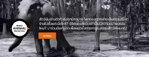 บริษัทท่องเที่ยวทั่วโลกปรับตัว หยุดขายทัวร์ทารุณสัตว์