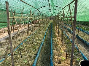 จากเกษตรอำเภอสู่สมาร์ทฟาร์มเมอร์ขายผักได้ราคาดีกว่าเดิม 5 เท่า