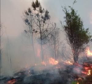 ไฟไหม้ป่าภูกระดึง