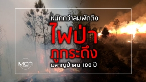 """หนักกว่าลมพัดตึง """"ไฟป่าภูกระดึง"""" ผลาญป่าสน 100 ปี"""