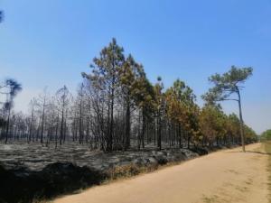 """เผยภาพ """"ภูกระดึง"""" หลังไฟป่าผ่านพ้น อุทยานฯ ระบุเที่ยวได้ตามปกติ"""