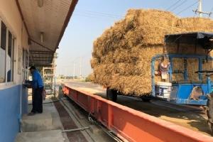 แก้ปัญหาฝุ่นควันจากการเผาไร่อย่างยั่งยืน! เอสซีจี ผนึกพันธมิตร เปิด 20 จุด รับซื้อฟางข้าว ใบอ้อย ซังข้าวโพดจากเกษตรกร
