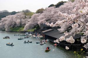 """งดเที่ยวชั่วคราว """"ญี่ปุ่น-สิงคโปร์"""" สุ่มเสี่ยงติดไวรัส โควิด-19"""