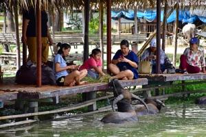 """""""กินแฟ ดูฟาย"""" ผ่อนคลายเพลินใจ ที่หมู่บ้านอนุรักษ์ควายไทย สุพรรณบุรี"""