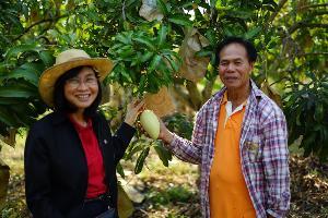 วว.ใช้เทคโนโลยีช่วยเกษตรกรอุดรฯ เพิ่มผลผลิตมะม่วงนอกฤดู 1-2 เท่า