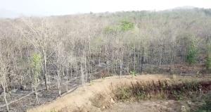 ซ้ำดาบสอง! ป่าไม้แจ้งจับโรงโม่ต้นสังกัด รปภ.มัดไม้ขีดติดยากันยุงทำชนวนเผา ปล่อยป่าลำปางไหม้