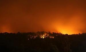 เปิดรับบริจาคเงินและหน้ากากกันฝุ่น ช่วยเหลือพี่น้อง จ.ตราด จากเหตุการณ์ไฟไหม้ป่า