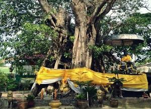 ขอเชิญผู้มีจิตศรัทธาร่วมบุญมหากุศลทอดผ้าป่า สมโภชน์ 438 ปีชาติกาลหลวงปู่ทวด