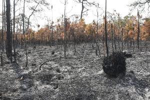 ภาพความเสียหายจากไฟป่าบนภูกระดึง (ภาพ : เพจ ส่วนปชส.-เผยแพร่ ทส.)