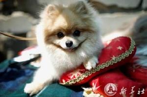 สุนัขฮ่องกงติด 'โควิด-19' ระดับต่ำ โฆษกย้ำให้กักกัน อย่าทอดทิ้ง
