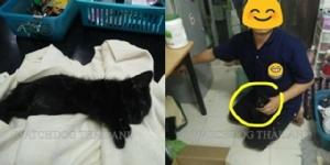 อ้างป่วยทางจิต! พนักงาน ม.ดังเชียงใหม่ ทำทีใจบุญรับแมวมาเลี้ยง แต่ทุบตีจนตาย 12 ตัว