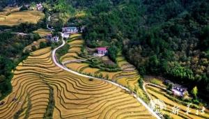 นักวิจัยจีนเตรียมปลูกข้าวพันธุ์พิเศษใน 'ดินเค็มด่าง' เนื้อที่กว่า 40,000 ไร่