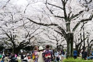 เที่ยวญี่ปุ่นยอดฮิตช่วงเทศกาลซากุระ