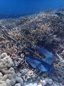 """""""วราวุธ"""" สั่งจัดการด่วนทิ้งสมอในเขตปะการัง ย้ำ ดำเนินการเด็ดขาด ไม่ว่าใครทำผิด ต้องอยู่บรรทัดฐานเดียวกัน"""