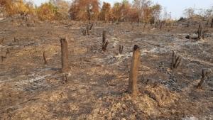 ชุดพญาเสือเปิดยุทธการทวงคืนผืนป่าแก่งกระจาน 500 ไร่