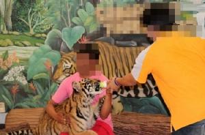 หยุดผสมพันธุ์เสือเพื่อท่องเที่ยว!  องค์กรพิทักษ์สัตว์ฯ บุกรัฐสภายื่นร่างกม.