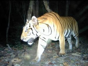 ZSL ร่วมกับเขตรักษาพันธุ์สัตว์ป่าสลักพระ ร่วมเฝ้าป้องกันภัยคุกคามเสือโคร่ง