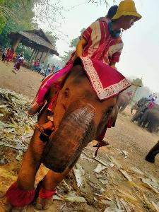 """ช้างโขลงสุดท้าย! หมู่บ้านพะยอชายแดนตาก จัดงาน """"วันอนุรักษ์ช้างไทย"""" ควาญช้างครวญเจอวิกฤตรอบด้าน"""