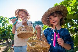 """สนุกสนาน ครบรส กับเทศกาลเก็บเกี่ยวองุ่นประจำปี  """"Monsoon Valley Harvest Festival 2020"""" ณ ไร่องุ่นมอนซูน แวลลีย์ หัวหิน"""