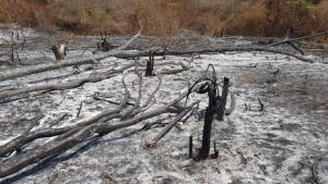 พญาเสือเปิดยุทธการทวงคืนผืนป่าแก่งกระจาน ตรวจยึดพื้นที่คืนได้กว่า 200 ไร่