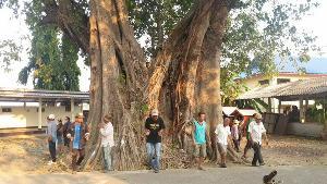 ตะลึง! ต้นโพธิ์โบราณอายุเท่าวัด 496 ปีมี 3 นางในต้นเดียวขนาด 24 คนโอบ ชาวบ้านแห่ตีเลขเสี่ยงโชค