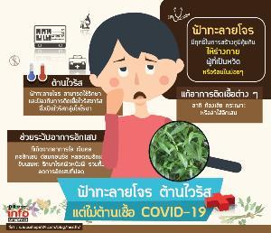ฟ้าทะลายโจร ต้านไวรัส  แต่ไม่ต้านเชื้อ COVID-19