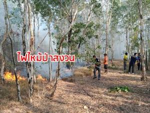 ไฟไหม้ป่าสงวนใกล้หาดทุ่งคลองสน จ.ตรัง ทำผืนป่าเสียหาย 500 ไร่ ล่าสุดคุมเพลิงได้แล้ว