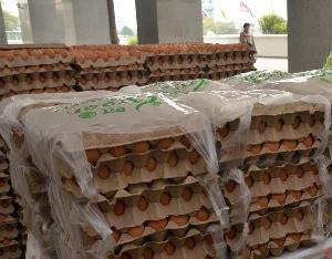 """""""พาณิชย์"""" สยบข่าวลือส่งออกไข่ไก่ทำราคาในประเทศพุ่ง ยันมีเพียงพอ ไม่ขาดแคลน"""