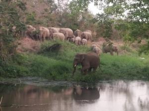 อากาศร้อน-พิษโควิด-19 ทำช้างป่าเขาชะเมา-ลิงเขาสามมุขขาดอาหารอย่างหนัก