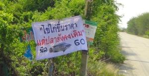 ไข่แพงกินปลาแทนก็ได้! ผู้เลี้ยงปลาเมืองแปดริ้วขึ้นป้ายขายปลาราคาถูก สะอาด ปลอดภัย
