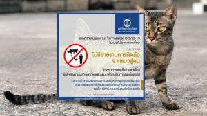 ม.มหิดล เผยยังไม่พบรายงานการติดเชื้อโควิด-19 จากสัตว์สู่คน หลังพบเชื้อปนในอุจจาระของแมวที่ประเทศเบลเยียม