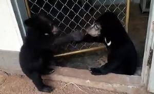 น้องกันเอง (ซ้าย) น้องบ้านคา (ขวา) 2 หมีน้อยน่ารักที่รอดตายจากไฟป่า (ภาพ : ศูนย์ช่วยเหลือสัตว์ป่าที่ 3 ประทับช้าง)